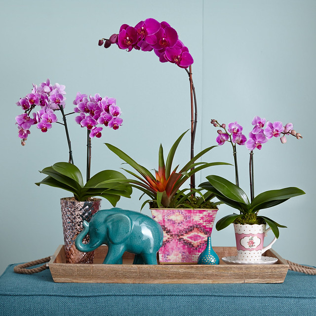 assorted orchids and blue ceramic elephant