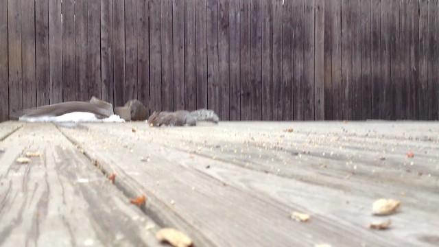 Funny Squirrels [Explored 02-27-15]