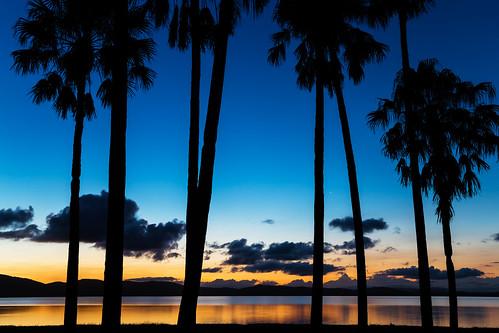 australia newsouthwales bootibooti nationalpark greatlakes myallcoast wallislake lake palmtrees greatlakessailingclub sunset forster canonef24105mmf4lisusm sailingclub bootibootinationalpark thelakesway canoneos6d tree palmtree