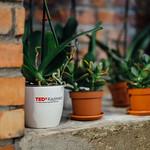 TedxKazimierz-24