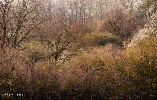 morning trees england colour nature spring unitedkingdom sony earthy wallingford wittenhamclumps southoxfordshire a99 sonyalpha andyhough slta99v andyhoughphotography tamronsp70200di