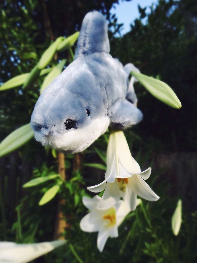 4f5cbf4840 week 19: gail-shark flower power bouquet to all women who … | Flickr