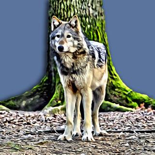 Lone Wolf (Portrait Painter)   by Dorset Photographic