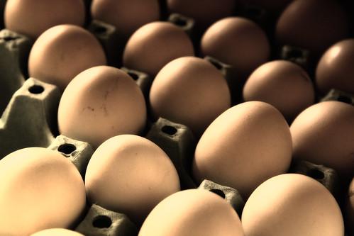 eggs | by victorcamilo