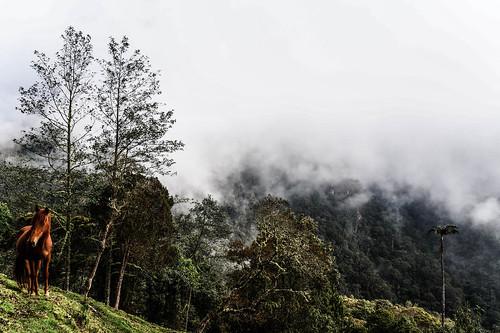 colombia parcero valledecocora cocora pnncocora tourism travetraveler hiking southamerca horse adventure views landscape postals mountain clouds foggy fog nubes parquenacional