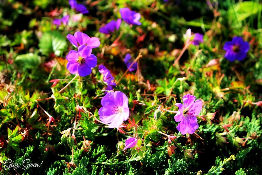Roan Mountain Flowers
