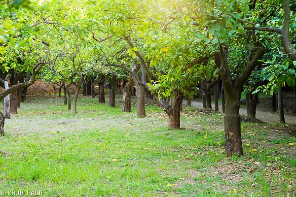 I Giardini Cataldo Sorrento