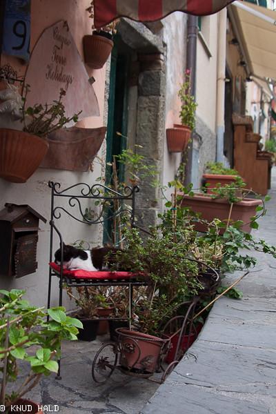 Street in Venazza Tuscany