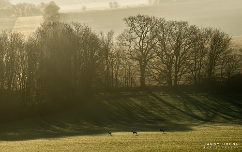 morning trees light england nature sunrise unitedkingdom sony deer fields rays wallingford southoxfordshire a99 sonyalpha andyhough slta99v andyhoughphotography