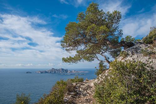 landscape sea seascape sky bluesky mediterraneansea island pineappletree green calanques marseille