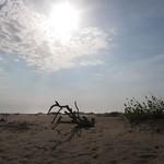 Mo, 06.04.15 - 16:12 - Strandgut