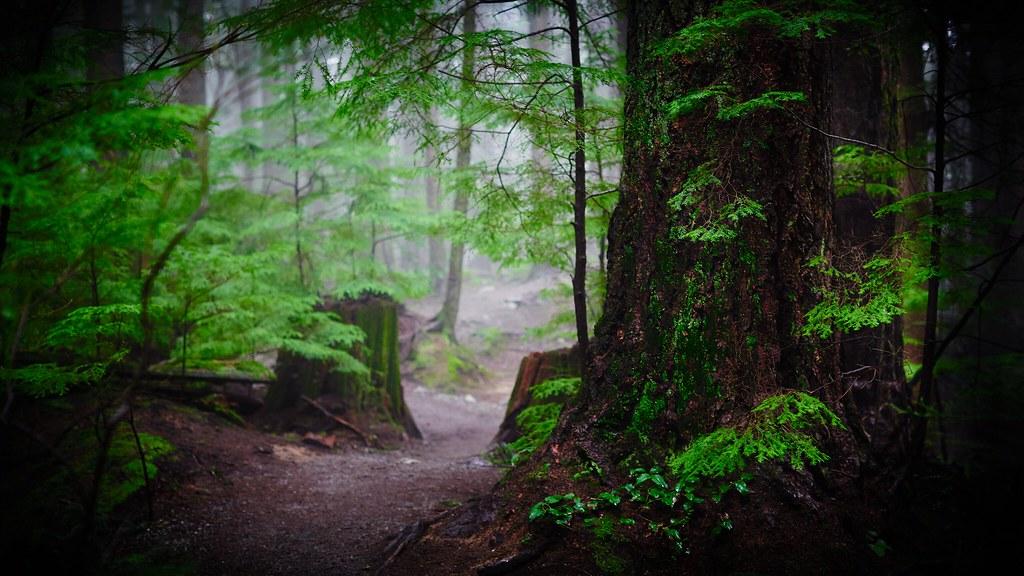 Desktop rainforest wallpaper 4k baden powell trail chris mccormack flickr - 4k wallpaper download ...