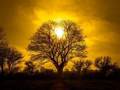 trees ireland sunset canon spring raw silhouettes 2015 irishlandscape