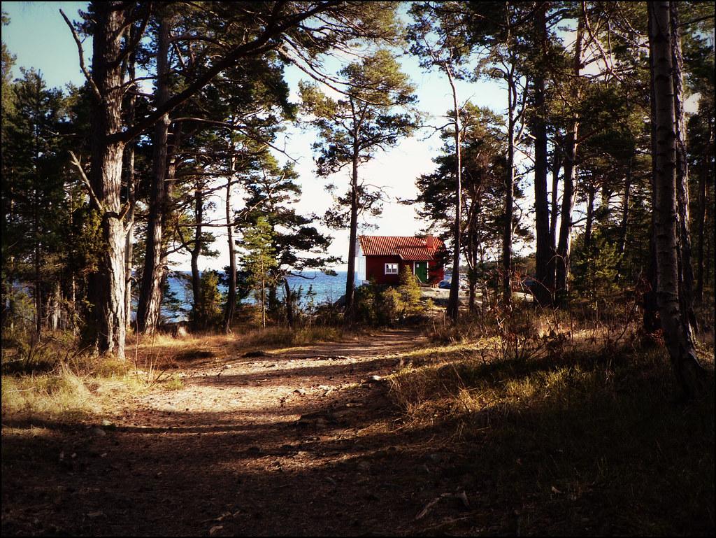 I ett hus vid skogens slut