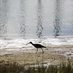 Long beak, Marina Park, Emeryville, CA