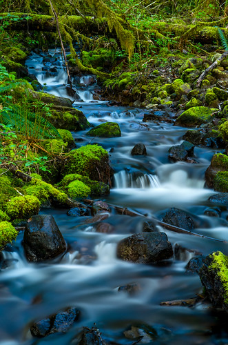 longexposure canada green moss rainforest stream bc lush squamish alicelake seatosky