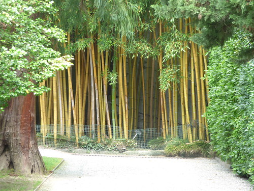 Isola Bella - Lake Maggiore - gardens of the Borromeo Palace - bamboo | by ell brown
