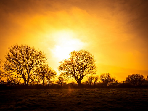 trees ireland sunset canon march spring raw silhouettes sunburst 2015 landscapephotography irishlandscape