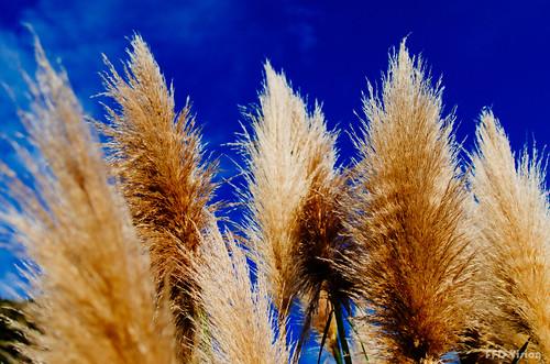 blue sky golden nikon toitoi vsco 35mm18g