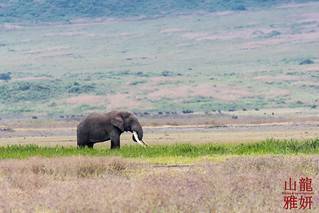 Mammoth Tusker | by DragonSpeed