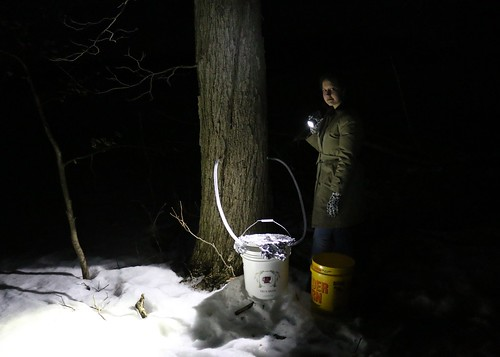 Maple Sugaring with Betsy | by Spherical Bull