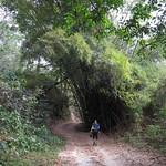 Mi, 01.04.15 - 14:54 - Bambus Wäldchen