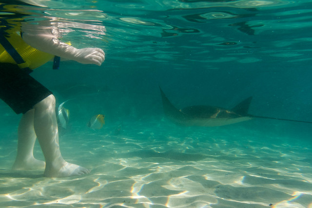 Discovery Cove - Swimming with Fish