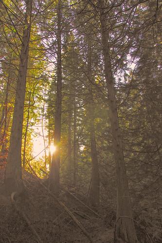 sun tree forest shining