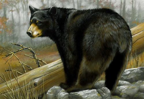Painting of black bear in the woods, by Rebecca Latham