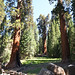 Sequioa & Kings Canyon National Parks, foto: Karel Janů