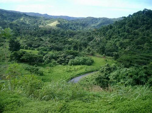 2. Fiji 2006-06-07 13-57