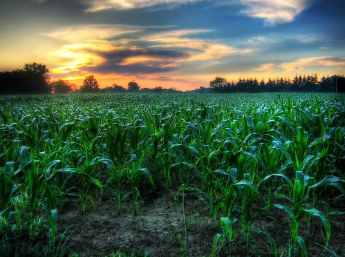 sky field clouds sunrise dawn early corn cornfield michigan hdr