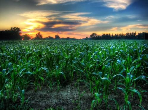 sky field clouds sunrise dawn early corn cornfield michigan hdr