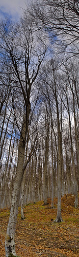 trees winter panorama nature forest geotagged hellas panoramas panoramic greece canoneos350d interestingness481 i500 geo:lat=40665015 geo:lon=214254