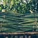 La cosecha del henequén por julien.ginefri