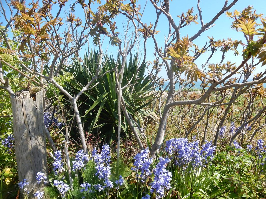Bluebells, Sumac & Yucca Deal to Dover