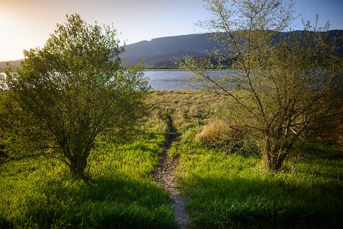pittlake pittmeadows water lake river stream nature landscape trail grass