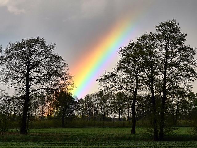 Regenbogen in der Elbmarsch