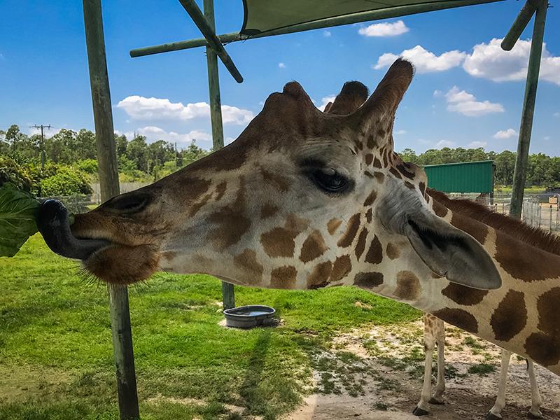 2018-04-20: Lion Country Safari