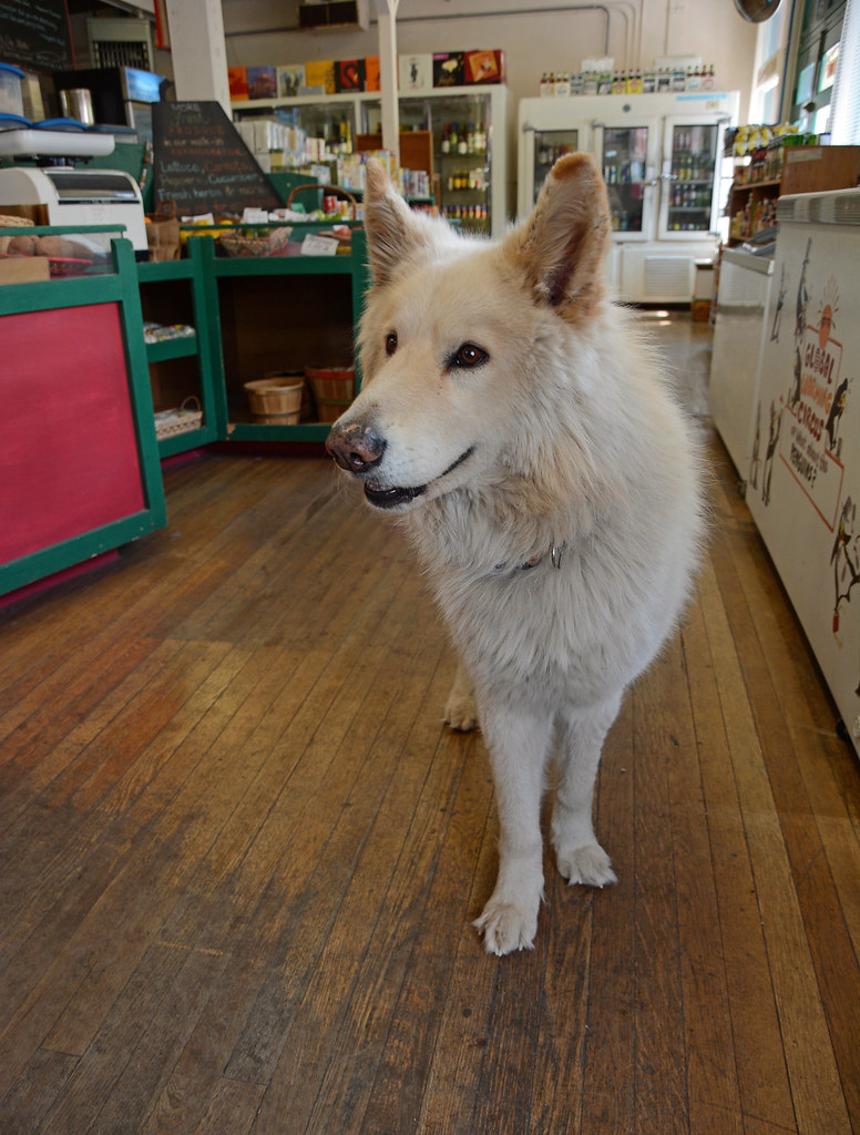THE WOLF IN THE GROCERY STORE