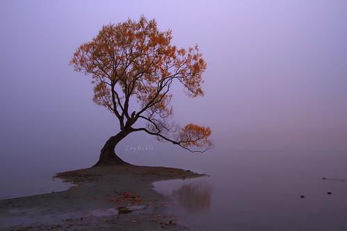 newzealand mist tree nature canon landscape southisland aeteroa wanakatree loyreble aucklandphotograper