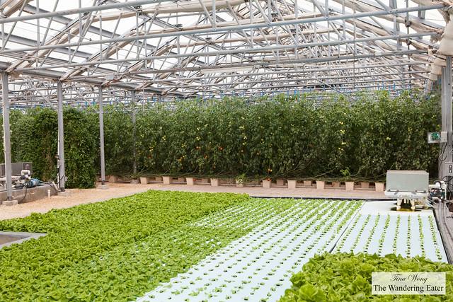 Interior of the Hydroponic Farm