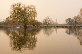 Heron Pond Mistiness | What a misty moist day. Coming back