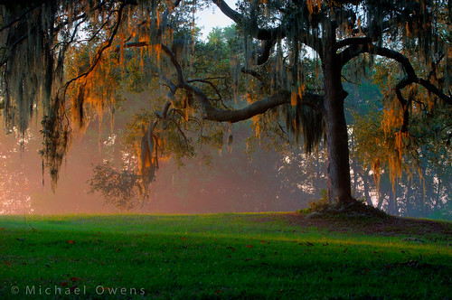 morning food mist green beauty grass fog sunrise georgia solitude play southcarolina warmth oxygen dew shade liveoak spanishmoss housing savannah shelter protection humid nesting nwr purification photosynthesis americansouth