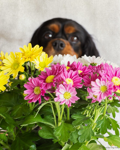 Stop and Smell the Flowers | by Beyond the Dog Dish