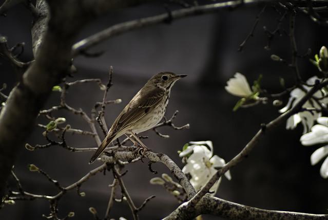 Bird in the Buds