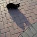 Gato al Atardecer / Cat at Sunset