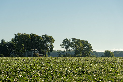 tree sky littlevenice michigan eatoncounty fields 3287 september house soybeans woodlot 2016 nikon nikond500 d500