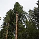 Top of Redwoods, Muir Woods