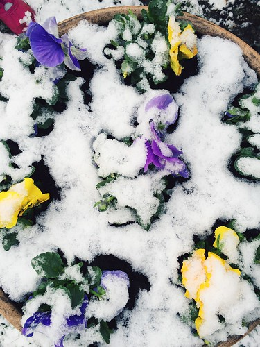 Baby Checkup and Snow in April (4/2/15) | by shaycam